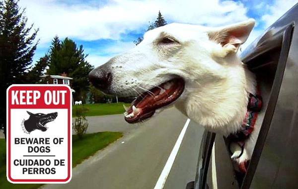 KEEP OUT BEWARE OF DOGS CUIDADO DE PERROS マグネットサイン
