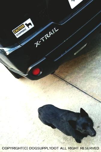 CAUTION 自動車 貼り付け マグネット ステッカー:シッパーキー スキッパーキー警戒中