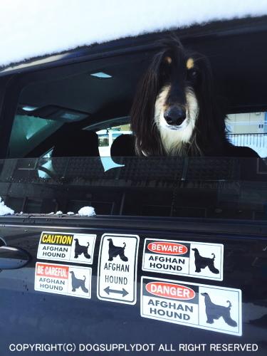 DANGER 自動車 貼り付け マグネット ステッカー:アフガンハウンド危険