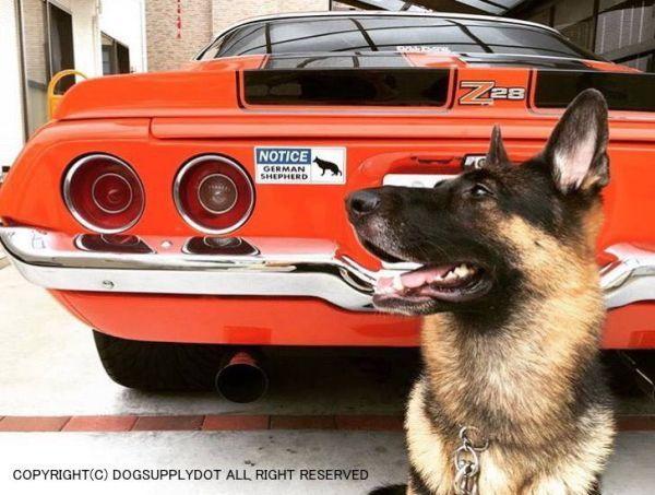 NOTICE 自動車 貼り付け マグネット ステッカー:お知らせ、ジャーマンシェパードがいます