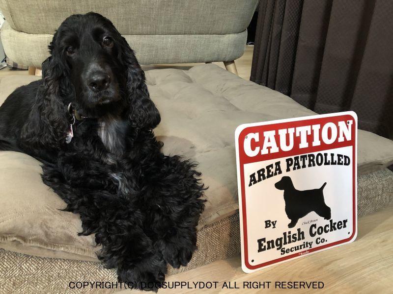 全く危なくなさそうなイングリッシュコッカーの愛犬です