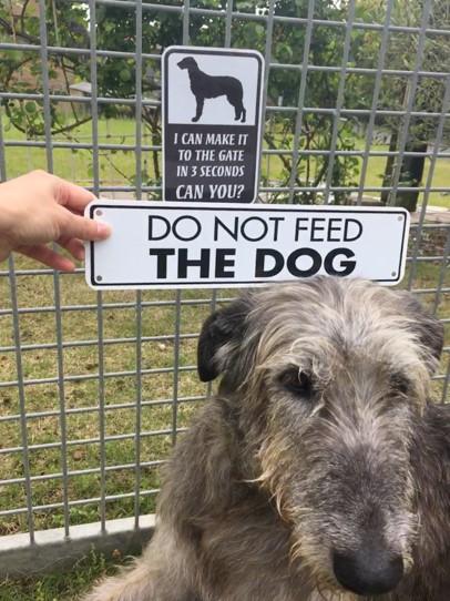 我が家のギニィス in Dog Runです♪
