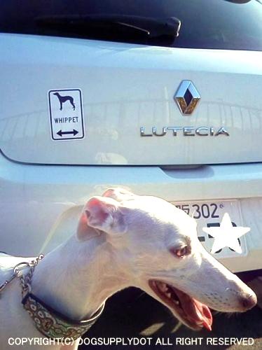 ウィペットのイラスト&矢印 マグネットサイン:ホワイトを白い自動車に貼り付けています♪