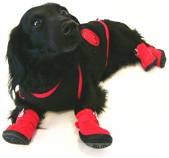 小型犬,靴,くつ,ブーツ,シューズ,ドッグスニーカー